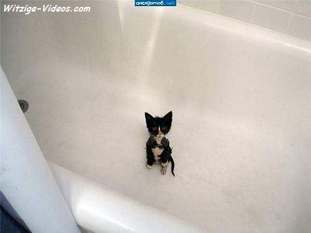 Kleiner Hund Naß In Einer Badewanne